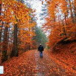 سفری پاییزی به استانبول